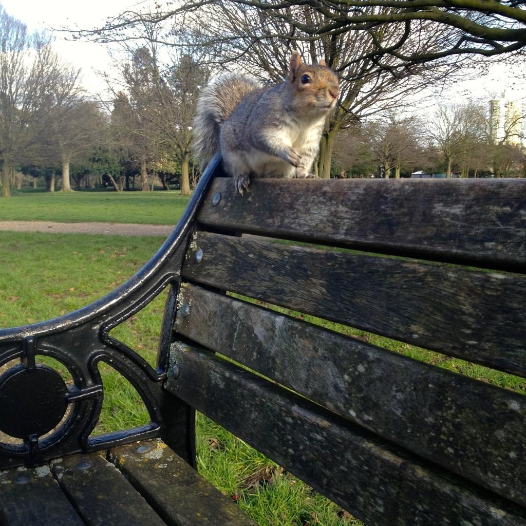 Parkland Walk Finsbury Park Squirrel