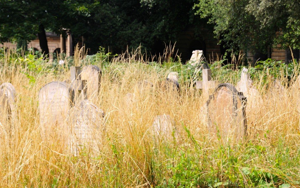 Overgrown section of Brompton Cemetery