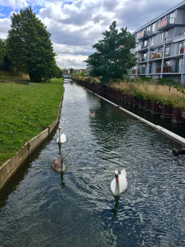 New River Path London Swans