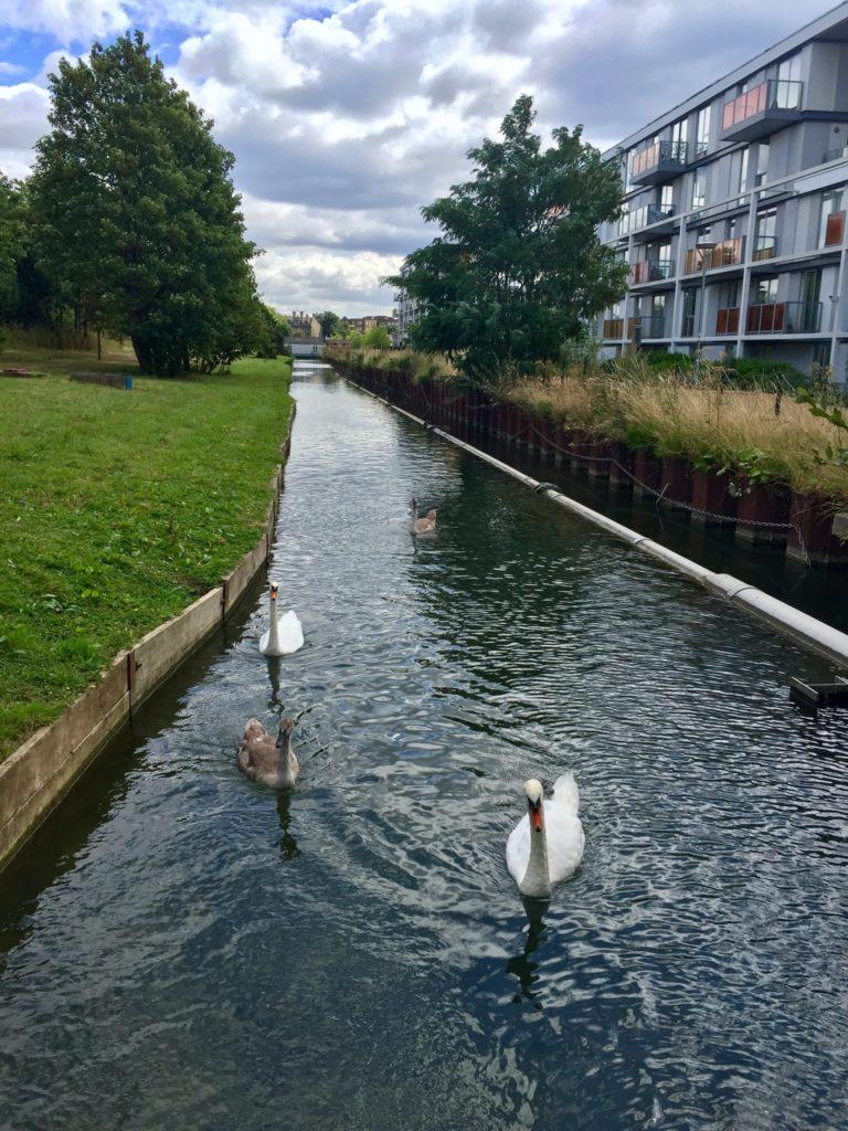New River Path London Swans