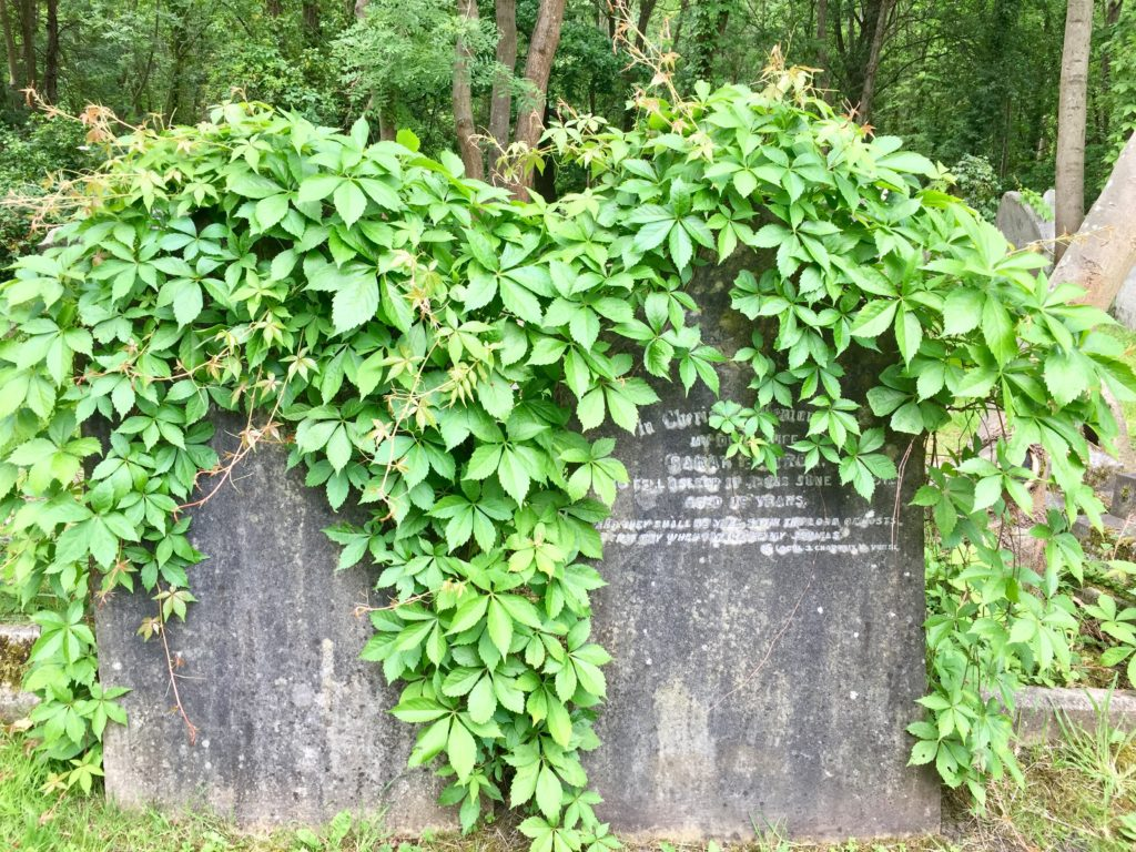 Highgate Cemetery East overgrown ivy on tombstones