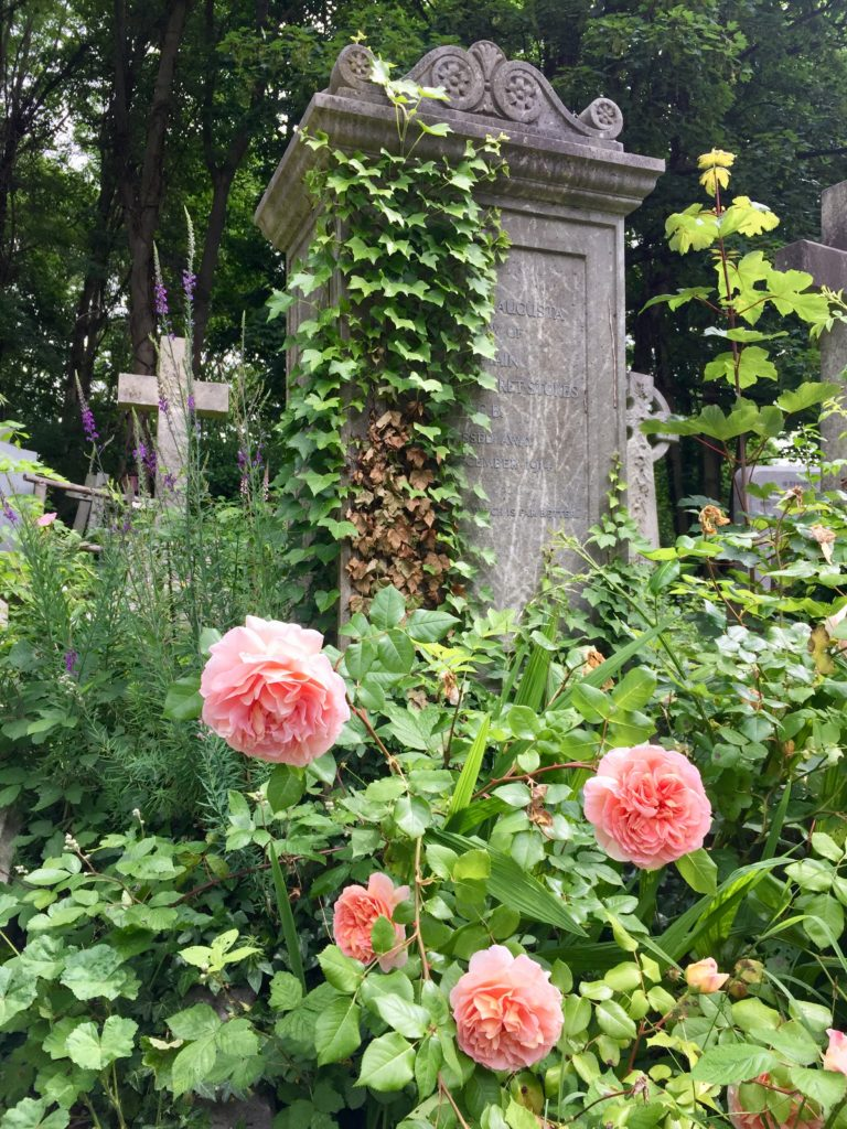 Highgate Cemetery Roses near Tombstone